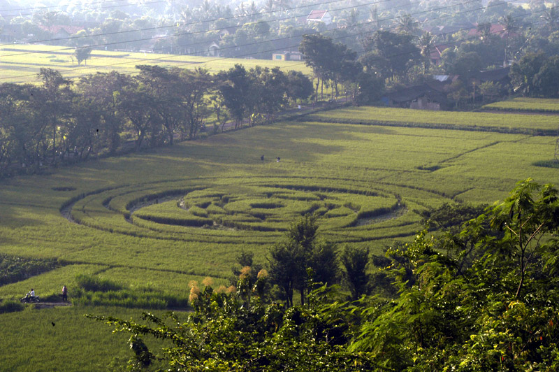 New January Crop Circle In Indonesia