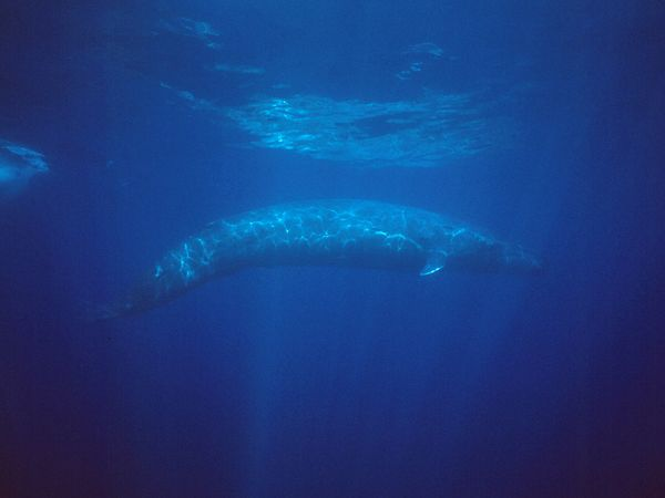 Blue Whales, UFO's, and the National Defense Authorization Act of 2012