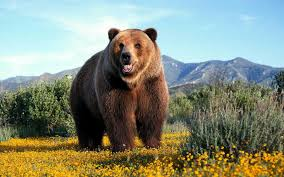 A Report From Grizzly Country