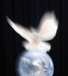 One of RVDB's photos, Peace On Earth.