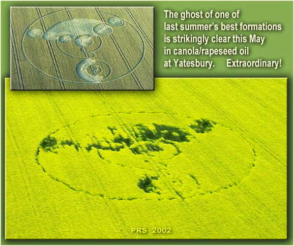 Dumber Than Dirt? The Earth Remembers a Genuine Crop Circle!